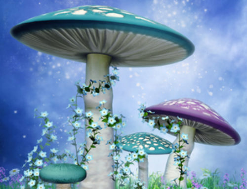 Gaia Sagrada Now Offers Magic Mushroom Retreats in Jamaica!!!!